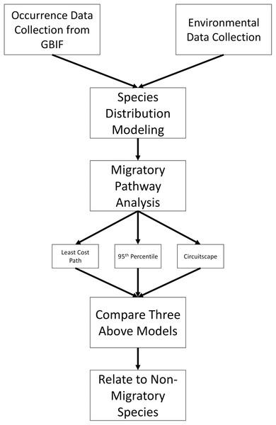 Methods overview.