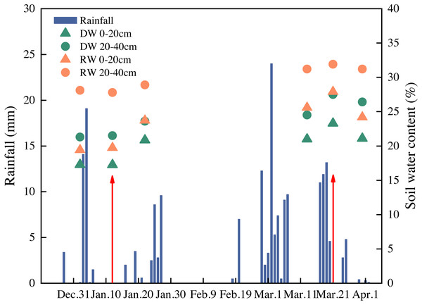 The soil moisture content and daily precipitation. Red arrows represent timing of nitrogen application (only M2 topdressed on 12 Jan; M1 and M2 topdressed on 21 Mar).