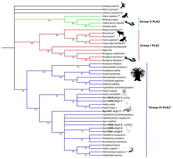 Phylogenetic tree of the Phospholipase A2 gene family.