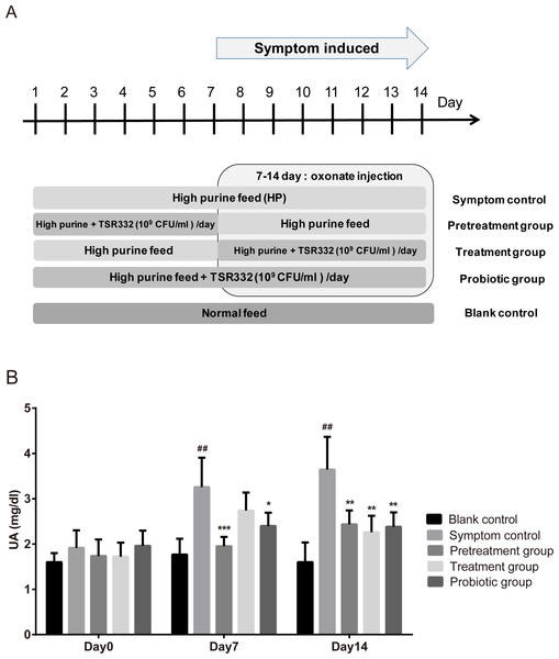 Pretrestment and treatment effects of TSR332 in hyperuricemic rats.