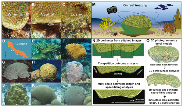 Coral competition outcomes and coral geometry methods.