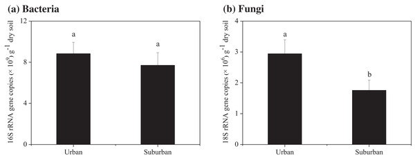 Abundance of the bacterial 16S rRNA (A) and fungal 18S rRNA genes (B) in the park soils.