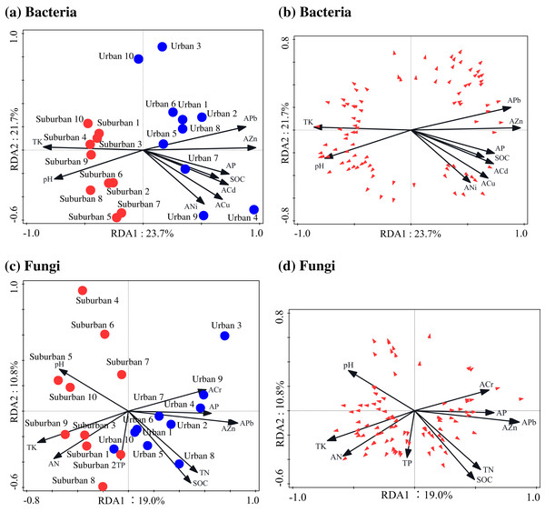Redundancy analysis used to identify the relationships among the bacterial (A, B) and fungal (C, D) genera (trilateral), soil properties and heavy metals.