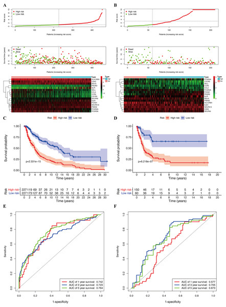 Construction of prognostic model in the TCGA and GSE65904 cohort.