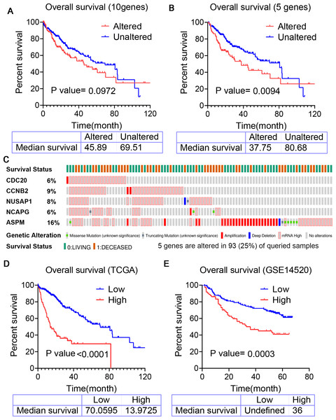 Kaplan–Meier analysis predicting overall survival for patients with HCC.