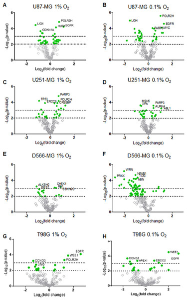 DNA repair gene regulation by hypoxia is observed across all GBM cell lines.