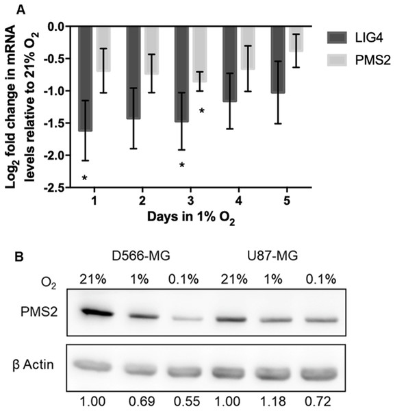 PMS2 and LIG4 are downregulated after acute and chronic hypoxic exposure.