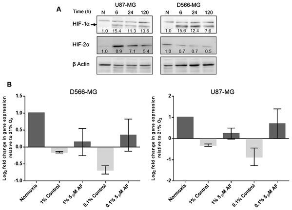 HIF inhibition by Acriflavin restored LIG4 downregulation.