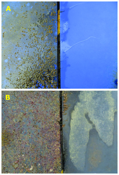 Representative images of biofouling on (A) Intersleek 1000 and (B) polyethylene panels with and without bubble stream treatment (duration = 119 days).
