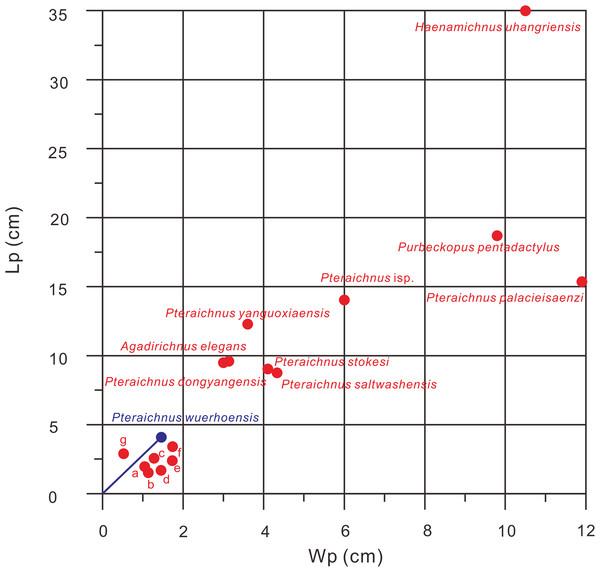 Comparison of Lp/Wp ratios of 15 ichnospecies of pterosaur tracks, Pteraichnus wuerhoensis isp. nov. and Pteraichnus isp. reported by He et al. (2013).