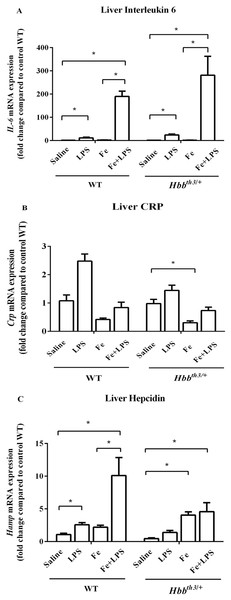 Effects of LPS on the mRNA expression of interleukin 6, C-reactive protein and hepcidin in the liver of wild type and thalassemic mice with/without parenteral iron loading.