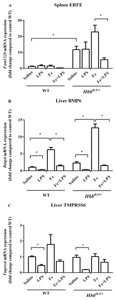 Effects of LPS on the mRNA expression of upstream regulators of hepcidin in wild type and thalassemic mice with/without parenteral iron loading.