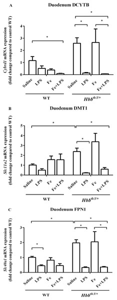 Effects of LPS on the mRNA expression of iron transport molecules in the duodenum of wild type and thalassemic mice with/without parenteral iron loading.