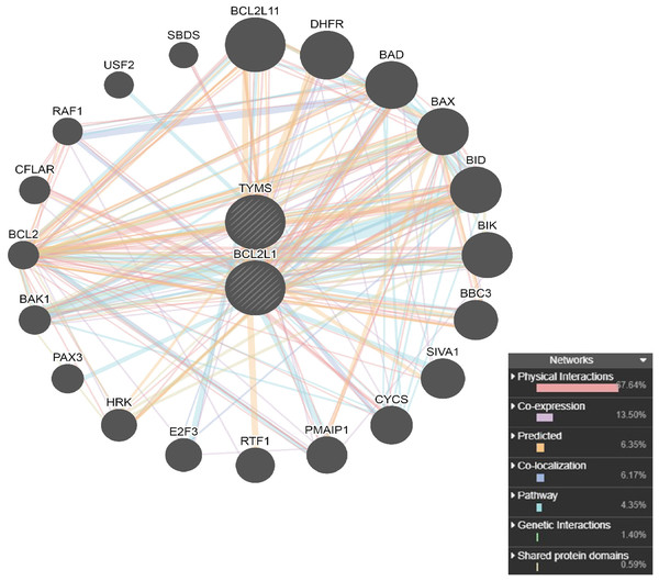PPI network analysis of interacting genes with TYMS and BCL2L1.