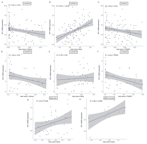 The association analysis between beta value of 1stExon, Body or TSS200 region and WT1 expression in luminal A (A–C), luminal B (D–F), basal-like (G) or HER2-riched (H) BC based on TCGA data.