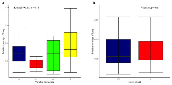 Analysis of variable nucleotide and target DNA strand impact on cleavage efficacy.