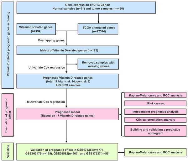 Experimental flowchart for construction and validation of a 17 vitamin D-related gene prognostic model.