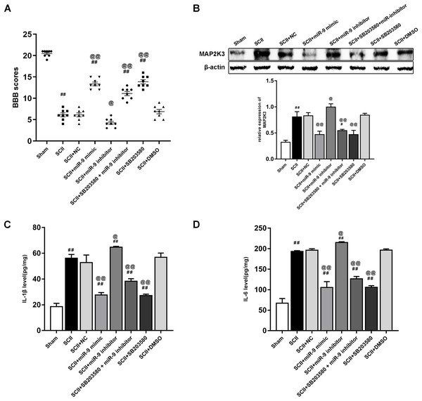 Intrathecal pretreatment with miR-9 mimic or SB203580 ameliorates neurological function and alleviates the upregulation of cytokines after SCII.
