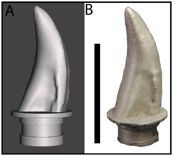 Maxillary tooth model of BMR P2002.4.1.