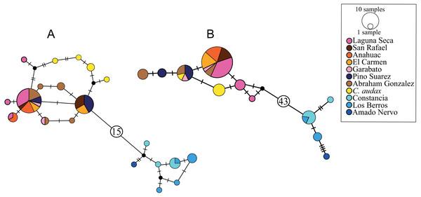 Haplotype networks.