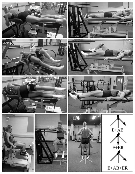 Hip muscle strength testing positions using a motor-driven dynamometer (MDD) and a custom rig.