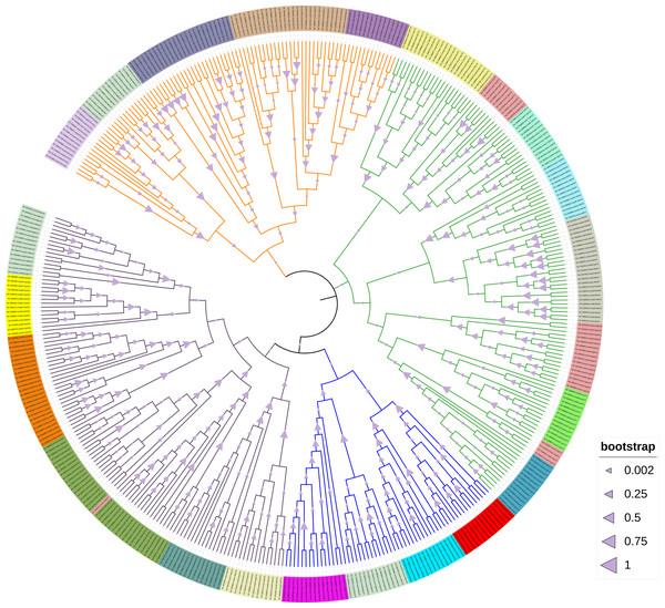 Green algae chloroplast tRNA phylogeny tree.