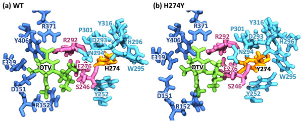 Snapshot images of the oseltamivir-neuraminidase complexes.