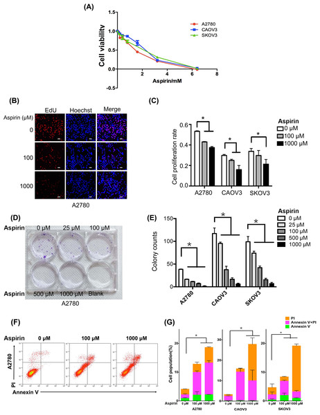 Aspirin inhibits proliferation and growth and induces apoptosis in human EOC cell lines in vitro.
