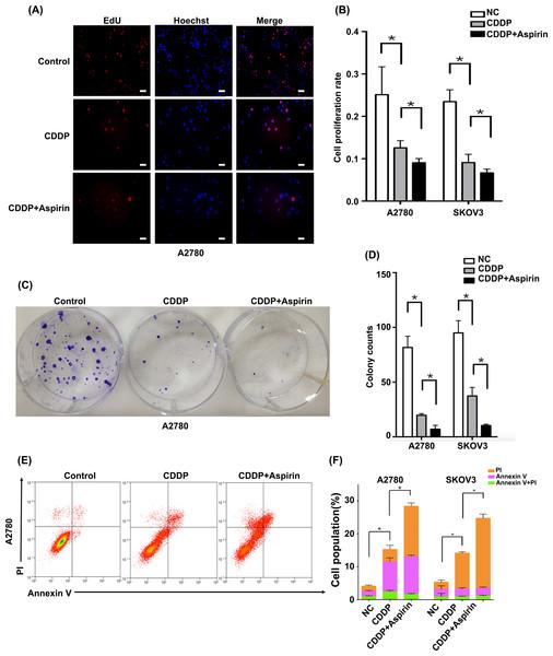 Aspirin enhances the CDDP sensitivity of EOC cells in vitro.