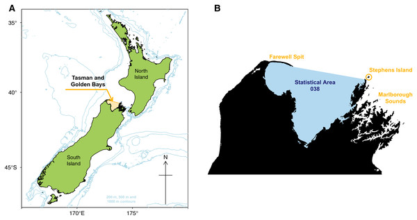 Map of New Zealand with Tasman and Golden Bays marked and shaded orange, including 200 m, 500 m, and 1,000 m isobaths (A). Map of Tasman and Golden Bays with fisheries Statistical Area 038 (blue shaded) and Farewell Spit, Stephens Island and Marlborough Sounds (orange labels) (B).
