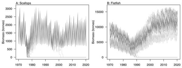 Simulated biomass trajectiories from TBGB_AM under perturbed initial conditions for (A) scallops and (B) flatfish.