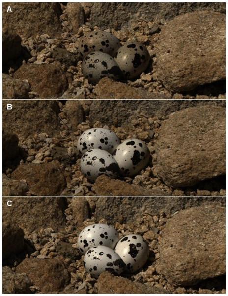 Reflectance images of quail eggs.