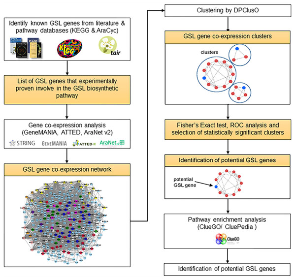 Step-by-step procedure to identify potential GSL genes involved in the GSL biosynthetic pathway.