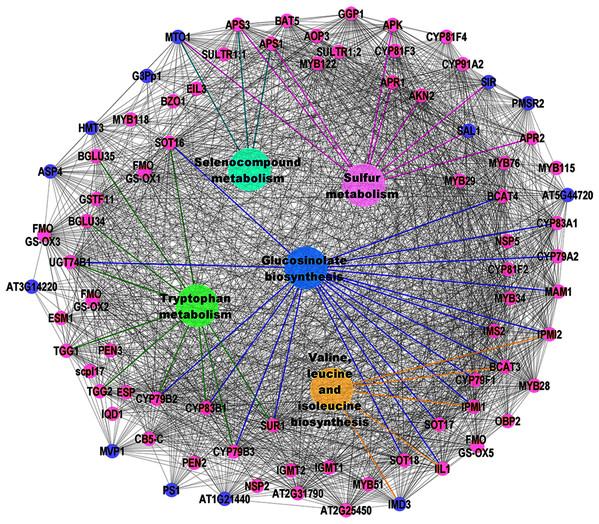 Visualization of KEGG pathway enrichment using ClueGO/CluePedia apps from Cytoscape.
