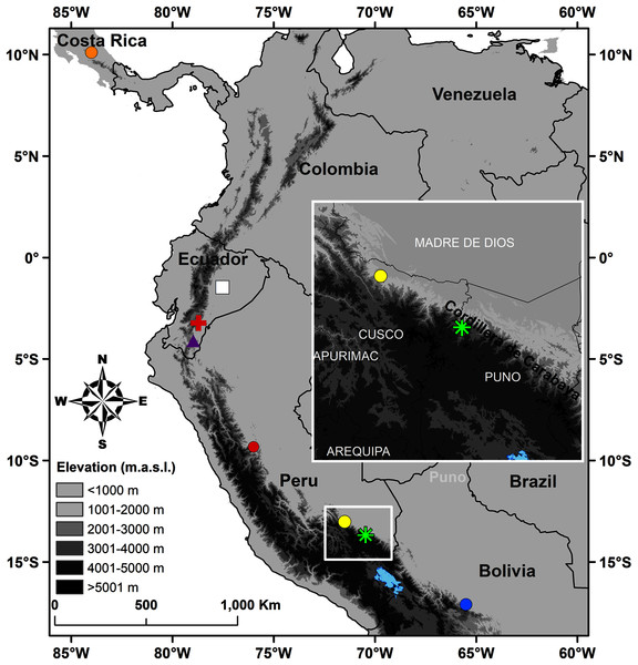 Map of Peru indicating the type locality of Pristimantis achupalla sp. n. (green asterisk).