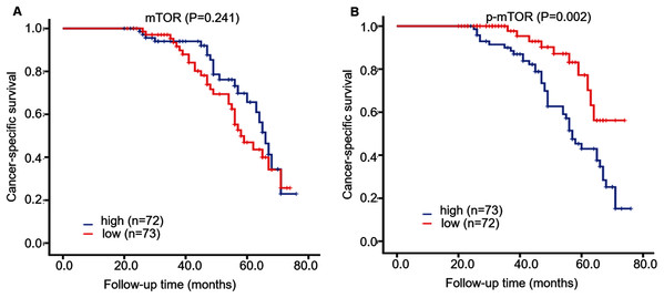 Kaplan–Meier survival curves demonstrated cancer-specific survival of 145 patients with ccRCC, according to mTOR (A) and p-mTOR (B) staining.