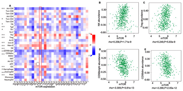 Correlation between mTOR expression and lymphocytes in 534 ccRCC patients (TISIDB).