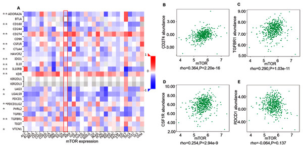Correlation between mTOR expression and immunoinhibitors in 534 ccRCC patients (TISIDB).