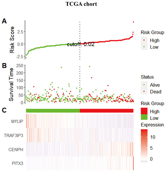 The distribution of the risk scores, gene expression levels, and the survival status of patients in the training set.