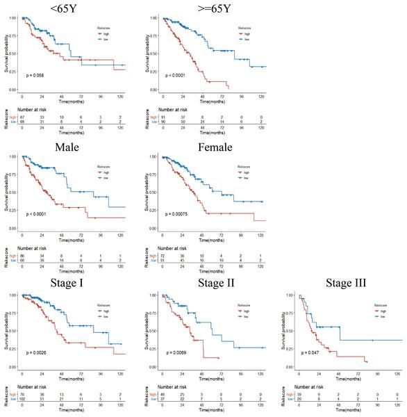 Subgroup Kaplan–Meier survival analysis in TCGA cohort.
