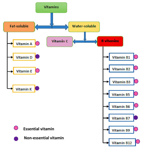 Classifications of vitamins.