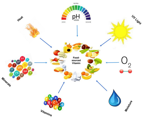 Factors that interact with food-sourced vitamins.