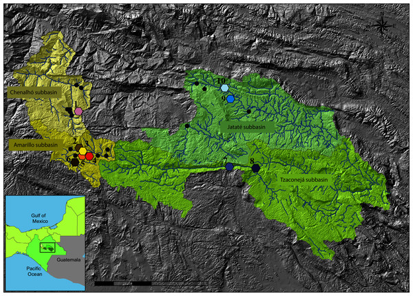 Map showing the geographic location of sampling sites of T. hildebrandi.