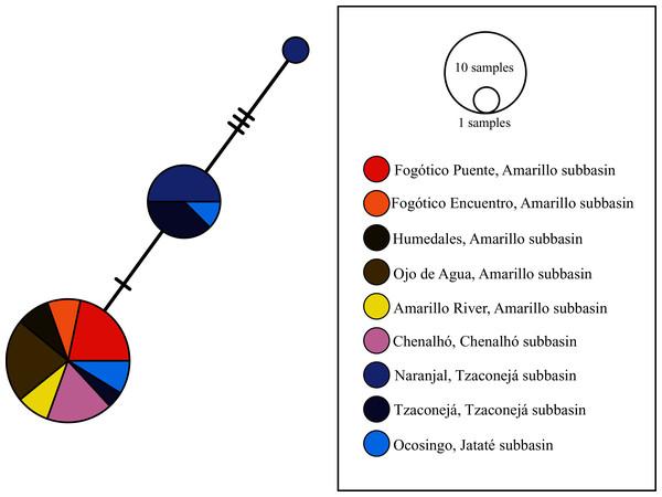 Haplotype network of nuc-S7 for all sampled populations of T. hildebrandi.