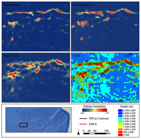 Ensemble models for demosponges, glass sponges, and stony corals showing a subset of highly suitable seamounts on the western side of the Salas y Gómez Ridge.