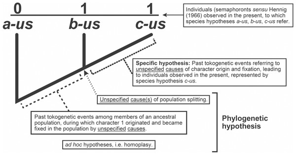Explanatory hypotheses implied by cladograms.