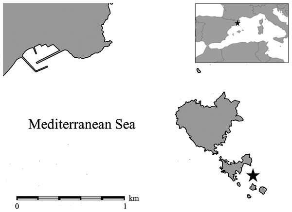 Map of the sampling location indicated with a star (Tascons Grossos, Marine Protected Area of the Medes Islands) in the Mediterranean Sea.