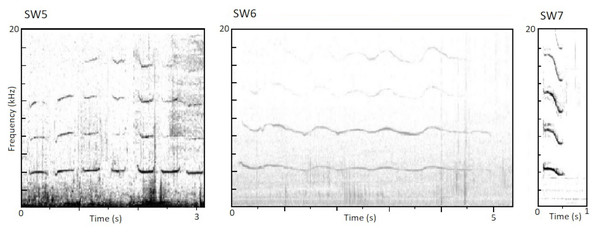 Spectrograms of the newly identified stereotyped whistles.