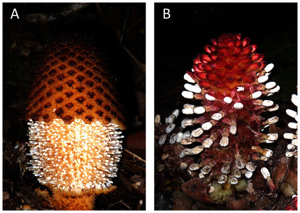 Photos of the studied non-photosynthetic species.