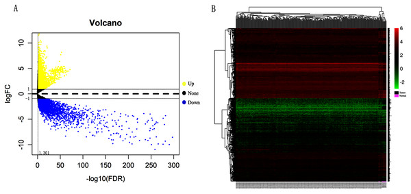 Identification of differentially expressed genes in CC based on TCGA and GTEx databases.